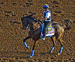 October 27, 2014:  Fed Biz, trained by Bob Baffert, exercises in preparation for the Breeders' Cup Dirt Mile at Santa Anita Race Course in Arcadia, California on October 27, 2014. John Voorhees/ESW/CSM