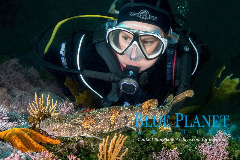 puffadder shyshark, Haploblepharus edwardsii, with scuba diver, aka Happy Eddy, False Bay, South Africa