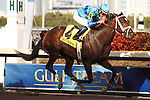 Live Lively with jockey Joel Rosario all alone at the wire in the Davona Dale (G2) at Gulfstream Park. Hallandale Beach Florida. 02-23-2013