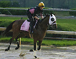APRIL 28, 2014: Aurelia's Belle, trained by Wayne Catalano, exercises in preparation for the Kentucky Oaks at Churchill Downs in Louisville, KY. Jon Durr/ESW/CSM