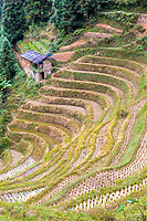 Longji, China.  Terraced Rice Paddies after Harvest.