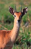 Carl, ANIMALS, wildlife, photos, shore, rocks(SWLA3767,#A#)