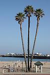 Palm trees and Muni Wharf