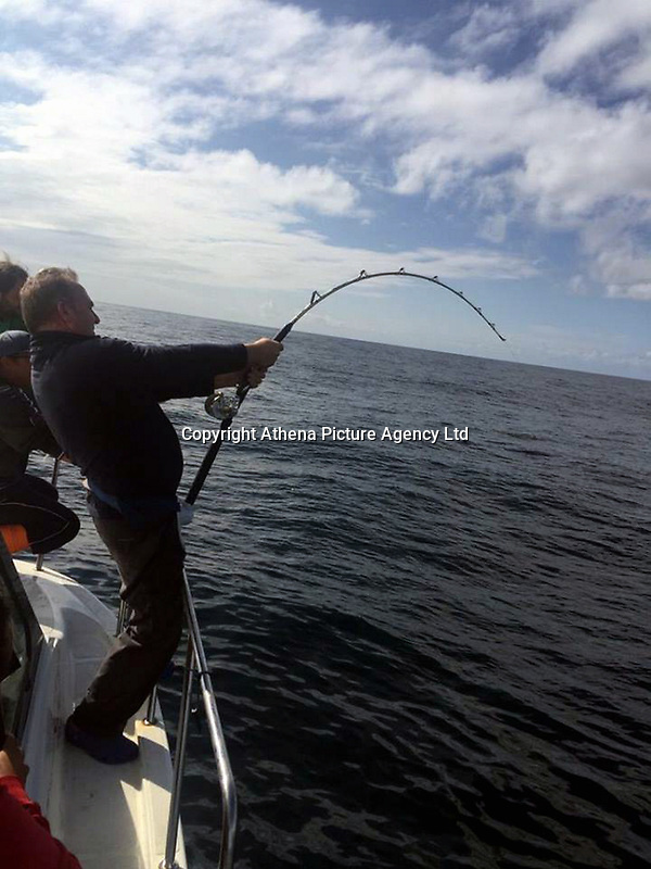 """Pictured: Andrew Alsop pulling his fishing rod with the giant tuna he caught off the Pembrokeshre coast, Wales, UK.<br /> Re: What is thought to be one of the biggest fish ever landed from the sea in Wales was caught in Pembrokeshire waters.<br /> A magnificent blue fin tuna, weighing in at 504 pounds and measuring seven feet seven inches was brought on board the White Water charter craft, operating out of Neyland, while on a shark fishing expedition in the Celtic Deep, 45 miles out to sea.<br /> Skipper Andrew Alsop fought the powerful giant for two hours and 15 minutes as the tuna towed the boat for two-and-half miles.<br /> Describing it as """"the fish of a lifetime"""", Andrew, aged 48, said: """"We've had Welsh shark fishing records off the boat, but this was actually the first time, in 20 years, that I was both the skipper and the angler.""""<br /> Saundersfoot commercial fisherman Gavin Davies had chartered the boat for a day's shark fishing trip with his crew members Tom Watkins, Chris Watkins and Andrew Jones and friends Arno Tiesing and Dorian Thomas.<br /> When it was suspected that the tuna could be on the end of a line, Andrew passed over the controls of the boat to Gavin and took the rod for the battle of his life.<br /> """"I really didn't think we had any chance in a million years of holding it on the tackle,"""" he admitted. """"But it really was a day that was meant to be as I was able to let Gavin take over the controls.<br /> """"At one stage I thought 'I can't do this' - the fish was pinwheeling and fighting. But I had to land it, or it would just have been another fisherman's tale.<br /> """"I knew it would be big, but when it eventually came up it was even more massive than I thought. It took six of us to get it on board. We made sure we had plenty of photos then put him back in the water - he was pretty tired but hopefully he would be ok.<br /> """"It was an absolutely mad day, to be honest, and I'm aching all over this morning!""""<br /> Added Gavin: """"I'd gone with the boy"""