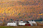 Fall foliage in Weybridge, VT, USA