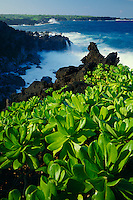 Naupaka-kahakai<br /> Pailoa Bay<br /> Waianapanapa State Park<br /> Island of Maui, Hawaii