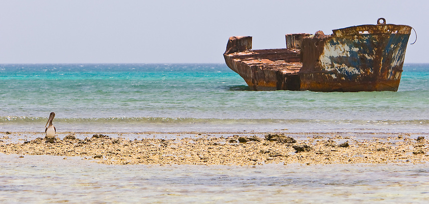 A lone pelican rests on a sandbar with an old shipwreck in the distance.  View of the coastline in Aruba.