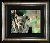 """Image Size:  16"""" x 20""""<br /> Finished Frame Dimensions:  30"""" x 34""""<br /> Quantity Available: 1"""