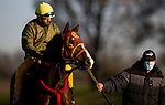 November 3, 2020: Big Runnuer, trained by trainer Victor Garcia, exercises in preparation for the Breeders' Cup Turf Sprint at  at Keeneland Racetrack in Lexington, Kentucky on November 3, 2020. Alex Evers/Eclipse Sportswire/Breeders Cup