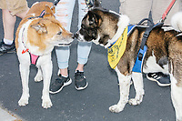 """Dogs wearing bandanas, including one bearing a Gadsden flag, sniff each other as people gather for an anti-lockdown protest organized by the alt-right group Super Happy Fun America near the home of Massachusetts governor Charlie Baker in Swampscott, Massachusetts, on Sat., May 16, 2020. The protest was in defiance of Massachusetts orders mandating face coverings and social distancing and prohibiting gatherings larger than 10 people during the ongoing Coronavirus (COVID-19) global pandemic. The state's stay-at-home order is expected to be updated on May 18, 2020, with a phased reopening plan issued by the governor as COVID-19 cases continue to decrease. Anti-lockdown protests such as this have become a conservative cause and have been celebrated by US president Donald Trump. Many of the protestors displayed pro-Trump messages or wore Trump campaign hats and shirts with phrases including """"Trump 2020"""" and """"Keep America Great."""" Super Happy Fun America, organizers of the protest, are an alt-right organization best known for creating the 2019 Boston Straight Pride Parade."""