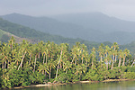 Milne Bay, Papua New Guinea; palm trees and tropical rainforest, viewed from Tawali Resort , Copyright © Matthew Meier, matthewmeierphoto.com