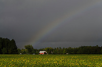 September rainbow over soybean field with Michigan Flywheelers Museum at one end.