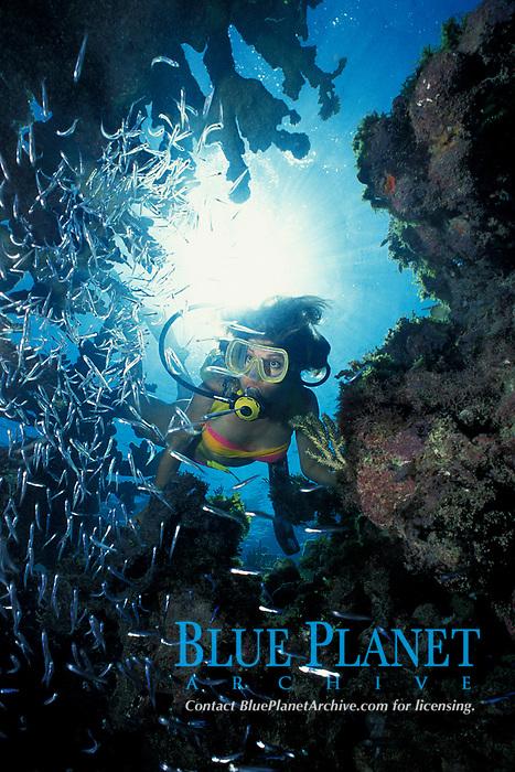 scuba diver explores Minnow Cave, a cavern full of glass minnows or silversides Berry Islands, Bahamas, Caribbean (Western Atlantic Ocean)