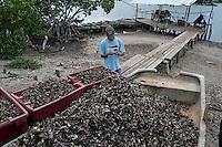 Rural scene Holguin Province, Cuba. 9-12-10