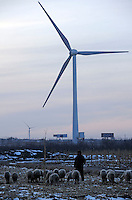 A Chinese farmer grazing the sheep in the field of The Beijing Guangting Wind Farm operated by Beijing Energy Investment Holding Co.,Ltd, at Huailai county in Hebei province, 70km northwest of downtown Beijing city..