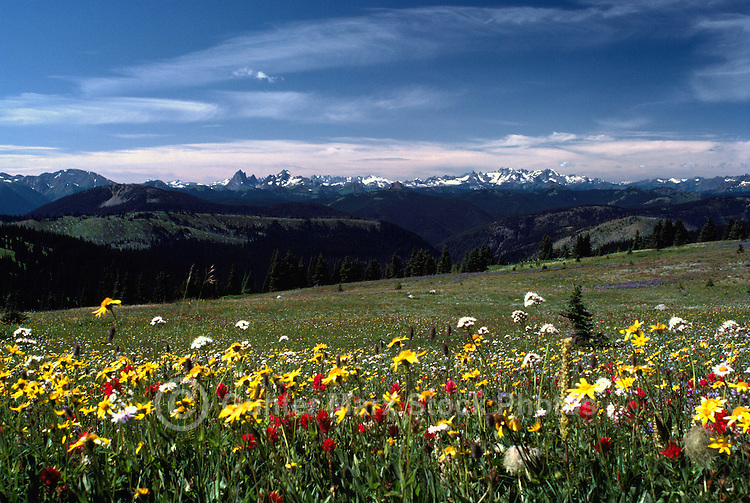 Manning Provincial Park, Southwestern BC, British Columbia, Canada - Wildflowers blooming in Alpine Meadow