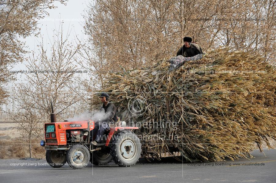CHINA Provinz Xinjiang uigurische Doerfer bei Stadt Kashgar hier lebt das Turkvolk der Uiguren , Farmer faehrt Stroh mir einem Traktor / CHINA province Xinjiang uighur villages around city Kashgar where uyghur people are living, farmer transport straw with tractor
