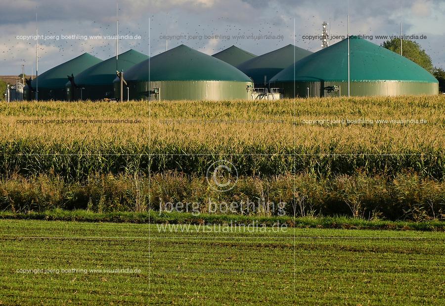 GERMANY, Sagard, agricultural farm with maize field and Biogas plant / DEUTSCHLAND , Sagard, Maisfeld und<br /> Biogasanlage zur Strom- und Waermeerzeugung