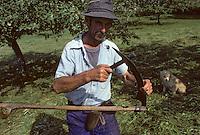Europe/France/Midi-Pyrénées/09/Ariège/Vallée de Garbet: Fenaison à CominacPHOTO D'ARCHIVES // ARCHIVAL IMAGES<br /> FRANCE 1980