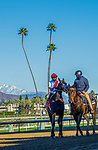 ARCADIA, CA JANUARY 30: #1 Medina Spirit, ridden by Abel Cedillo, in the post parade of the Robert B. Lewis Stakes (Grade lll) on January 30, 2021 at Santa Anita Park in Arcadia, CA by Casey Phillips/EclipseSportswire/CSM)