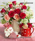 Alfredo, FLOWERS, BLUMEN, FLORES, photos+++++,BRTOLMN29362,#f#, EVERYDAY ,rose,roses