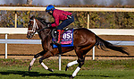 November 3, 2020: Aunt Pearl, trained by trainer Brad Cox, exercises in preparation for the Breeders' Cup Juvenile Fillies Turf at Keeneland Racetrack in Lexington, Kentucky on November 3, 2020. Alex Evers/Eclipse Sportswire/Breeders Cup