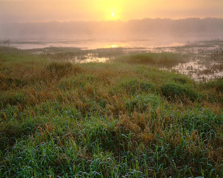Foggy sunrise on the Wild and Scenic Myakka River; Myakka River State Park, FL
