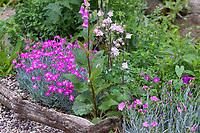 Unser Naturgarten in Hammer, Garten, insektenfreundlicher Garten, vogelfreundlicher Garten, blütenreich, Wildblumen, Wildblumengarten