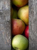kroatische Minderheit, Apfelernte in Sombor, Vojvodina, Serbien, Europa<br /> Croatian Minority, harvest of apples, Sombor,, Vojvodina, Serbia, Europe