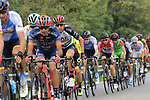 The peloton including Rui Costa (POR) UAE Team Emirates in action during the 99th edition of Milan-Turin 2018, running 200km from Magenta Milan to Superga Basilica Turin, Italy. 10th October 2018.<br /> Picture: Eoin Clarke | Cyclefile<br /> <br /> <br /> All photos usage must carry mandatory copyright credit (© Cyclefile | Eoin Clarke)