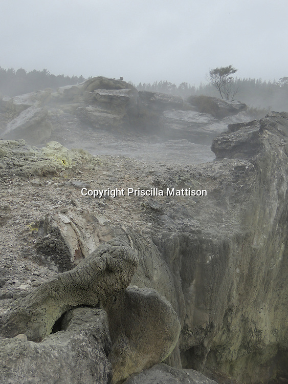 Rotarua, New Zealand - September 15, 2013:  Trees are visible through the steam rising from thermal activity.