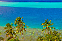 Green palm trees overlooking the blue and turquoise lagoon, on Huahine island, a romantic honeymoon destination near Tahiti, Polynesia, Pacific Ocean