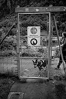 Switzerland. Canton Uri. Rastplatz Erstfeld. Rest area on the A2 (the Gotthard Motorway) which lies on the Gotthard axis and crosses the Alps. A woman holds her dog on a leash. A metal door separates the roadside area from a walking path close too the river Reuss. The sign allows people and cyclists to enter, but prohibits the access to any wild animals (deers,..). 10.06.2020 © 2020 Didier Ruef