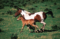 A mare and a colt gallop side by side in a grassy meadow.