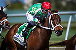 HALLANDALE FL - FEBRUARY 27: Cathryn Sophia #5, ridden by Javier Castellano wins the Fasig-Tipton Davona Dale Stakes at Gulfstream Park on February 27, 2016 in Hallandale, Florida.(Photo by Alex Evers/Eclipse Sportswire/Getty Images)