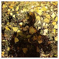 A man's shadow falls against fallen yellow leaves.