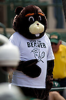 Baylor Bears beaver mascot during the NCAA Regional baseball game against Oral Roberts University on June 3, 2012 at Baylor Ball Park in Waco, Texas. Baylor defeated Oral Roberts 5-2. (Andrew Woolley/Four Seam Images)