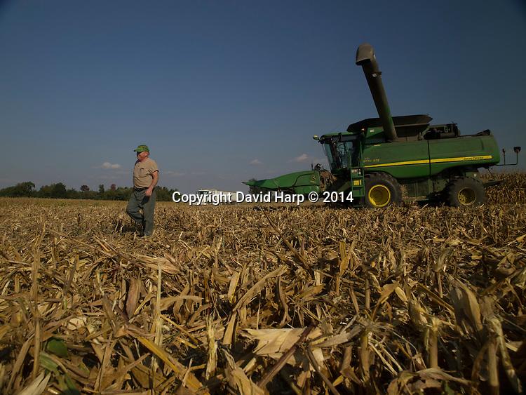 David Hutchinson harvests corn on the family farm.<br /> Hutchinson's  combine  requrgitates corn into a truck that will  take it to a grain drier.