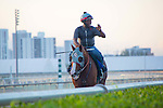 HALLANDALE BEACH, FL - JANUARY 21: California Chrome with exercise rider Dhigi Gladney after putting in their final work in preparation for the Pegasus World Cup at Gulfstream Park. (Photo by Arron Haggart/Eclipse Sportswire/Getty Images