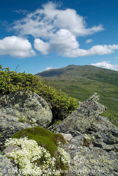 Mount Washington from Caps Ridge Trail in the White Mountains of New Hampshire USA during the summer months.
