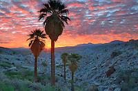 Sunrise at Mountain Palm Springs. Anza Borrego Desert State Park, California