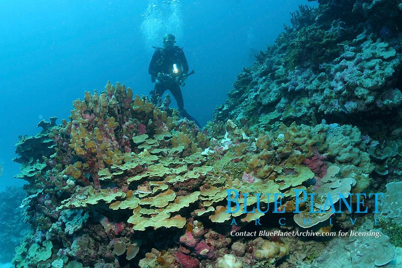 Corals, sp? and diver. Lisianski island, Papahanaumokuakea Marine National Monument, Northwestern Hawaiian Islands, Hawaii, USA, Pacific Ocean