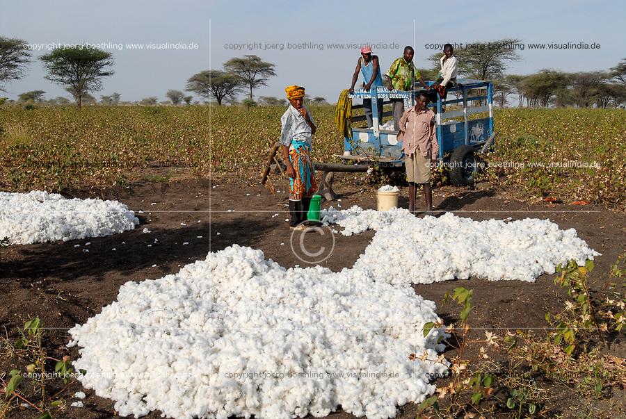 TANZANIA, Meatu, loading of cotton harvest on cart / TANSANIA, Baumwollernte in Meatu, Verladung der Baumwolle auf Karren