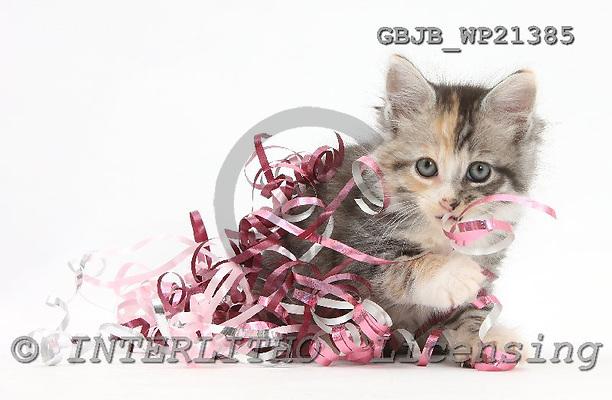 Kim, CHRISTMAS ANIMALS, photos, GBJBWP21385,#XA# stickers