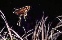 SG04-011a  Flea jumping in mammal host hair.