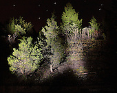 Fine art night photography.  Photograph of cedars reclaiming mortar battery.  Limited edition Fine Art Print printed to conservation standards.