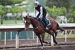 SHA TIN,HONG KONG-APRIL 23: Rising Romance ,trained by David hayes,exercises in preparation for the Audemars Piguet QEll Cup at Sha Tin Racecourse on April 23,2016 in Sha Tin,New Territories,Hong Kong (Photo by Kaz Ishida/Eclipse Sportswire/Getty Images)