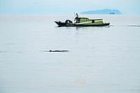 Irrawaddy dolphin, Orcaella brevirostris, Borneo, Malaysia, Pacific Ocean