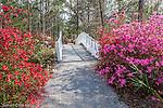 Azalea-lined paths at Cypress Gardens in Moncks Corner, South Carolina, USA