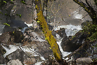 Yosemite National Park.<br /> 3.6.2017, Yosemite National Park<br /> Copyright: Christian-Ditsch.de<br /> [Inhaltsveraendernde Manipulation des Fotos nur nach ausdruecklicher Genehmigung des Fotografen. Vereinbarungen ueber Abtretung von Persoenlichkeitsrechten/Model Release der abgebildeten Person/Personen liegen nicht vor. NO MODEL RELEASE! Nur fuer Redaktionelle Zwecke. Don't publish without copyright Christian-Ditsch.de, Veroeffentlichung nur mit Fotografennennung, sowie gegen Honorar, MwSt. und Beleg. Konto: I N G - D i B a, IBAN DE58500105175400192269, BIC INGDDEFFXXX, Kontakt: post@christian-ditsch.de<br /> Bei der Bearbeitung der Dateiinformationen darf die Urheberkennzeichnung in den EXIF- und  IPTC-Daten nicht entfernt werden, diese sind in digitalen Medien nach §95c UrhG rechtlich geschuetzt. Der Urhebervermerk wird gemaess §13 UrhG verlangt.]